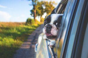 samochód używany, pies za szybą